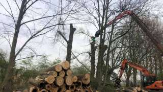 Machinaal bomen rooien in Nunspeet