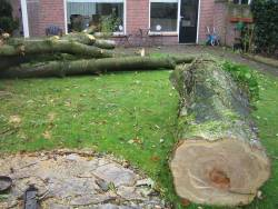 kersenboom rooien in Best